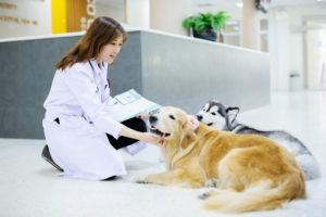 Veterinary Services san jose
