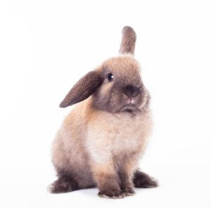 A Care Guide For New Rabbits Housing & Exercise