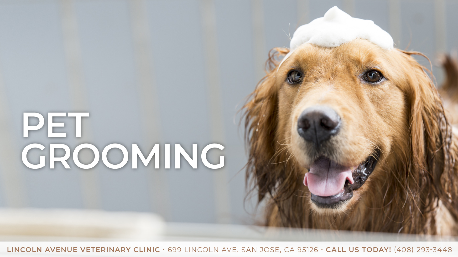 Image Result For Lincoln Pet Clinic