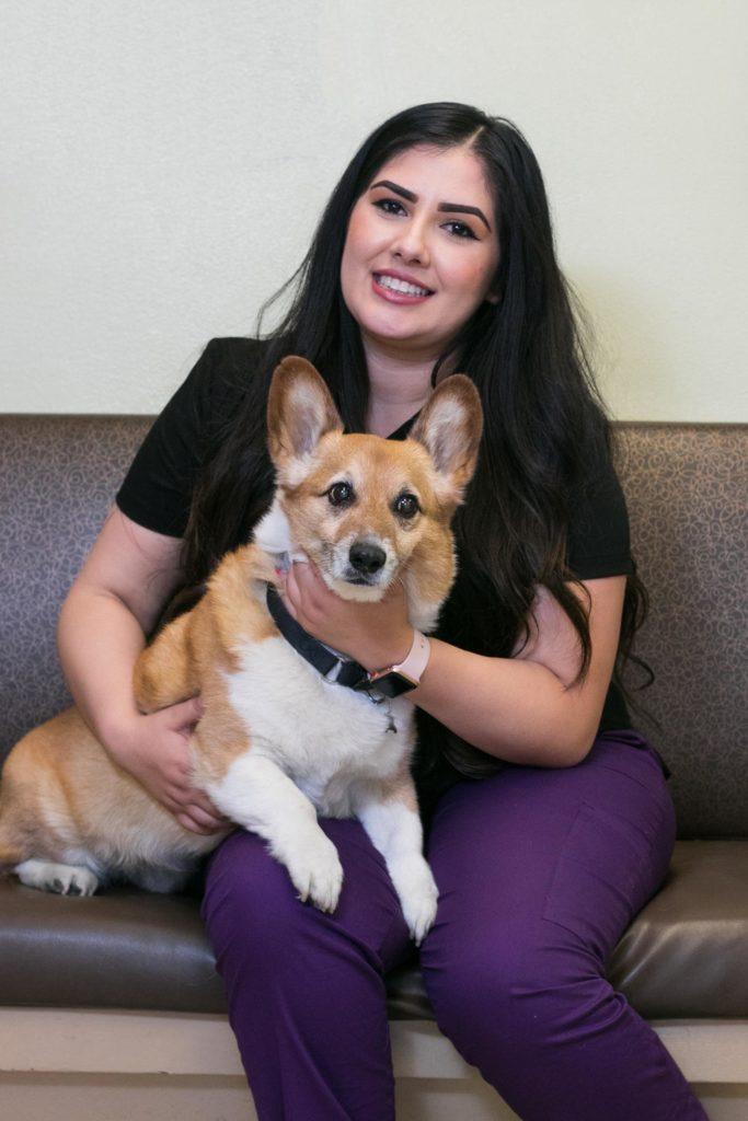 Our Veterinary Team in San Jose, CA | Lincoln Avenue ...